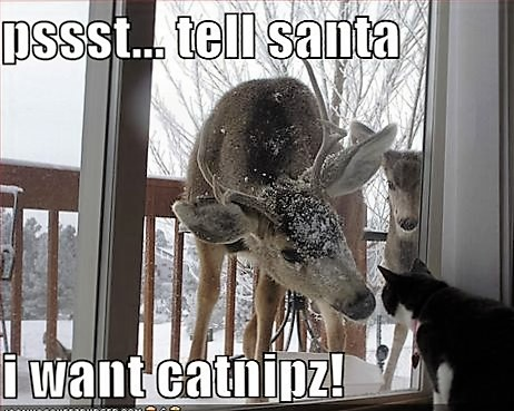funny-pictures-cat-wants-catnip-for-christmas.jpg