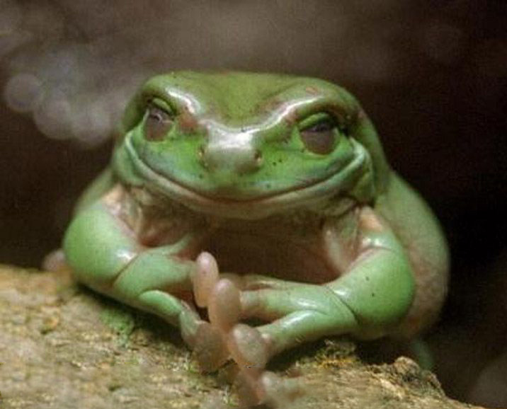 729586831_preview_funny-evil-smile-frog-hands-clasped-yes-excellent-pics.jpg